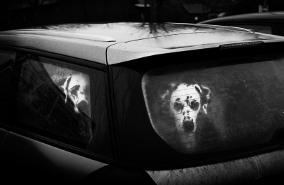 dogsweb.jpg